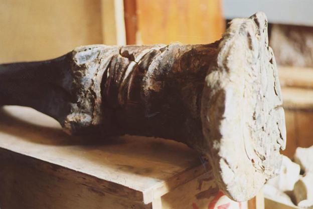 mammoth leg