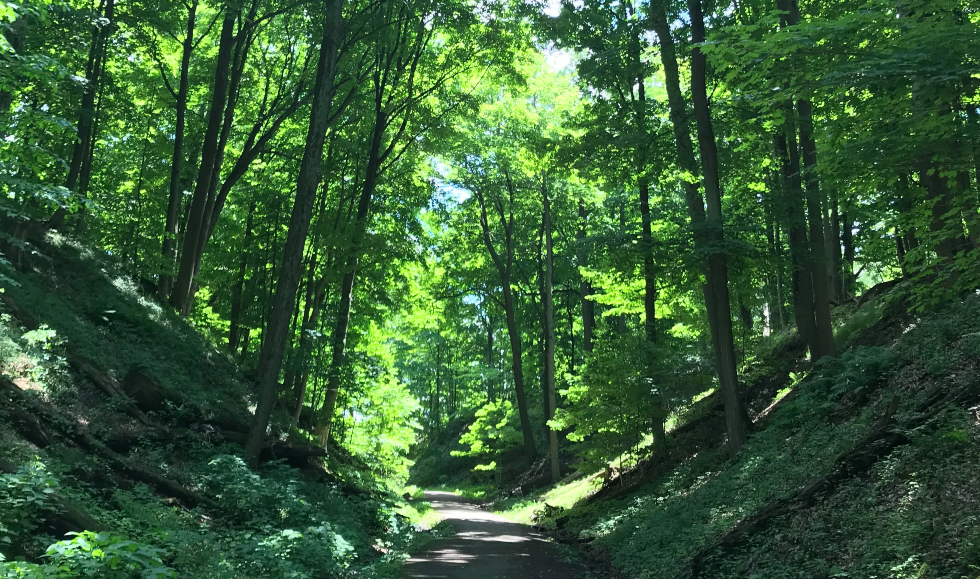 A path leads through tall, green trees at McMaster University